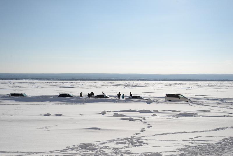 быков фото ленск зима предоставить вашему