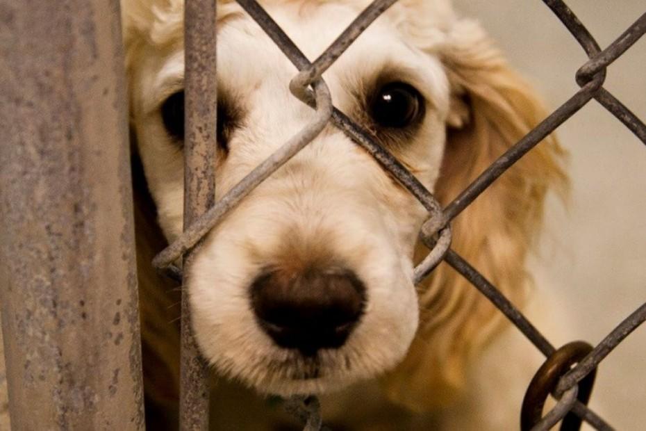 Прокуратурой Якутии проведена проверка исполнения законодательства об ответственном обращении с животными