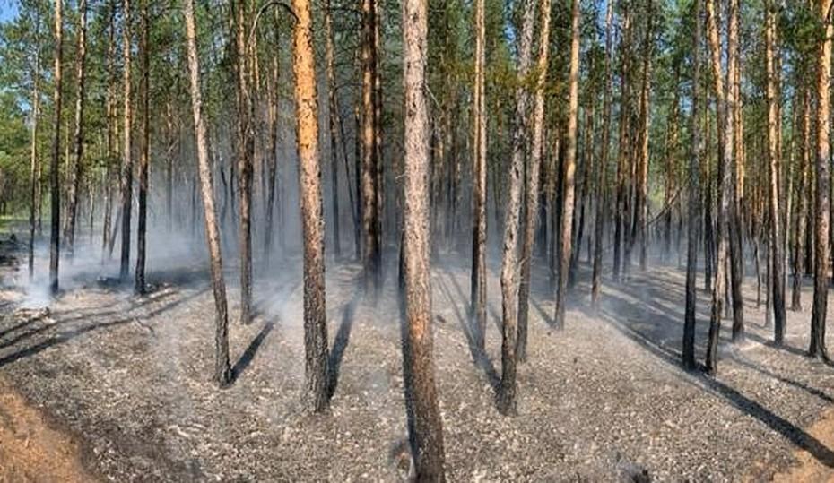 На территории Якутии действует 96 природных пожаров