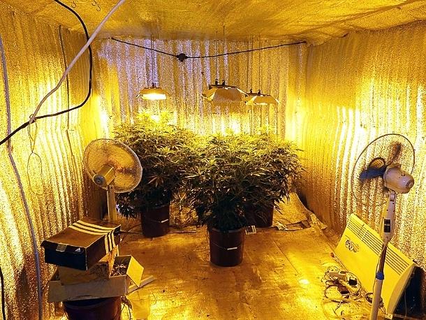 Как вырастить коноплю зимой в гараже рисунок ручкой марихуаны